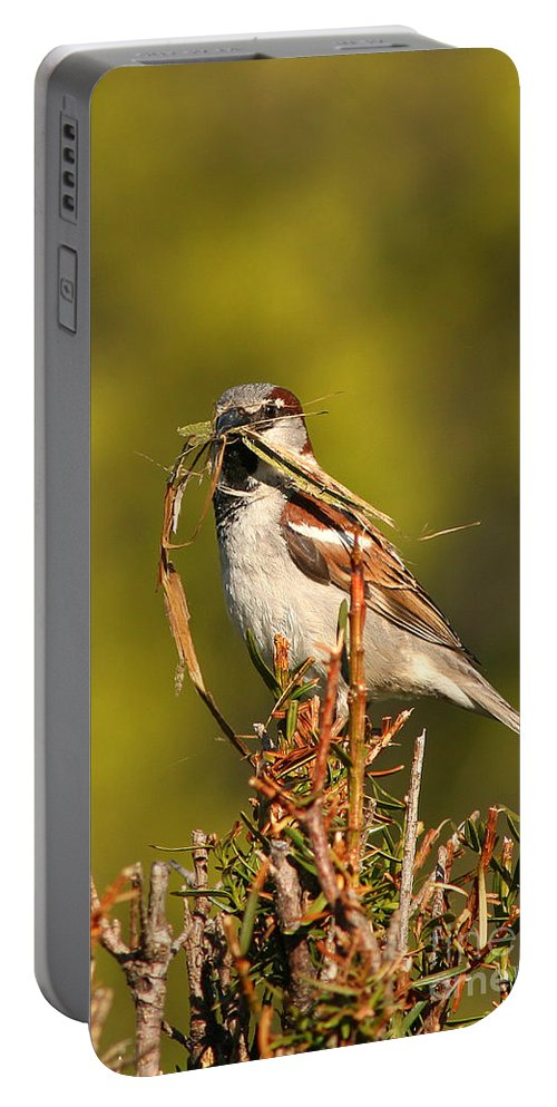 Sparrow Portable Battery Charger featuring the photograph English Sparrow Bringing Material To Build Nest by Max Allen