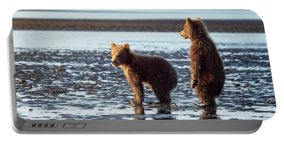 Grizzly Bear Portable Battery Charger featuring the photograph Enjoying The Golden Light by Claudia Kuhn