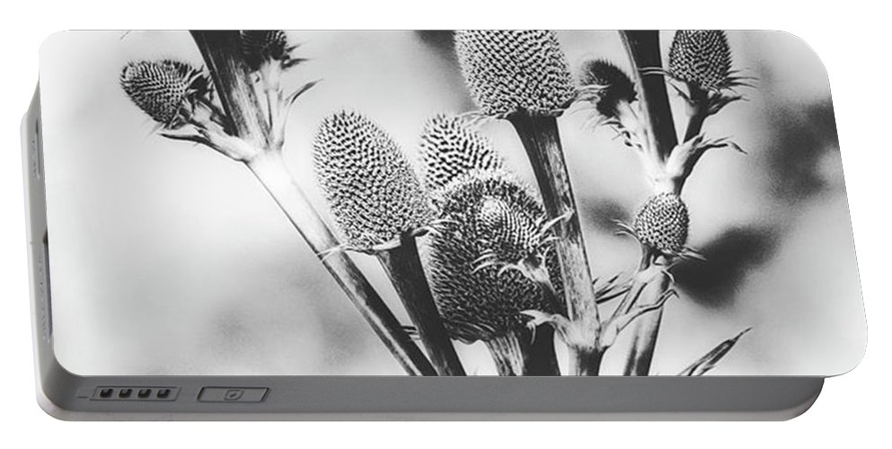Beautiful Portable Battery Charger featuring the photograph Eryngium #flower #flowers by John Edwards
