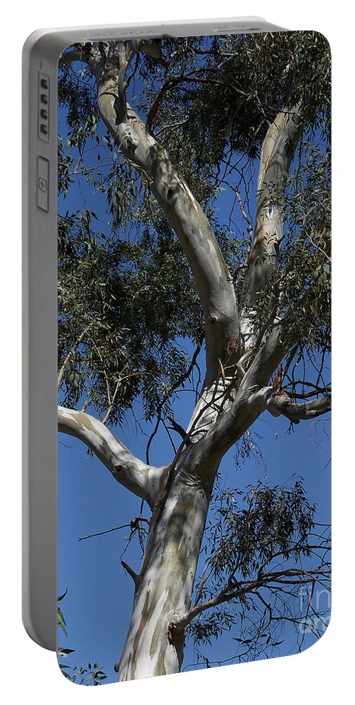 Trees Portable Battery Charger featuring the photograph Eucalyptus by Kathy McClure