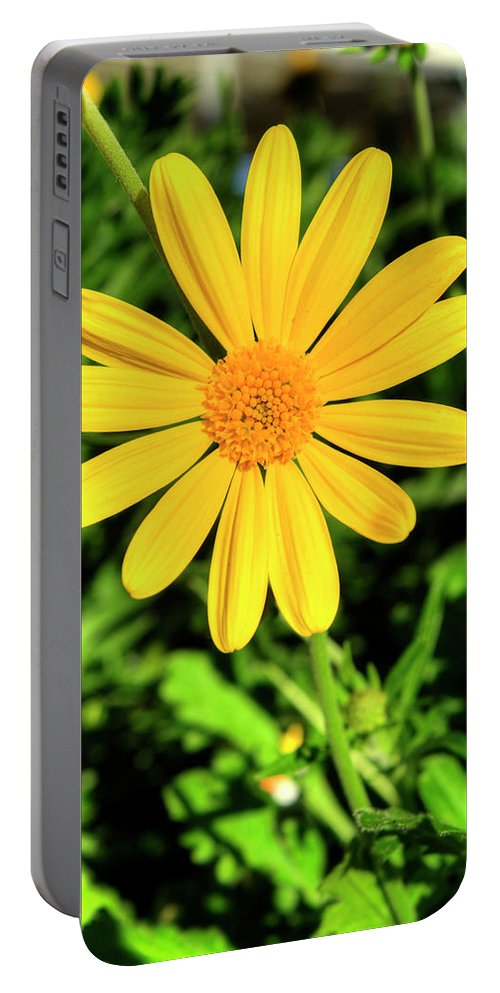 Louisville Portable Battery Charger featuring the photograph Euryops Flower by FineArtRoyal Joshua Mimbs