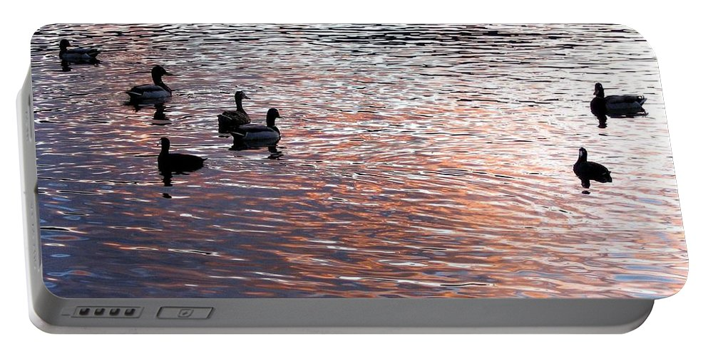 Ducks Portable Battery Charger featuring the photograph Evening Swim by Will Borden
