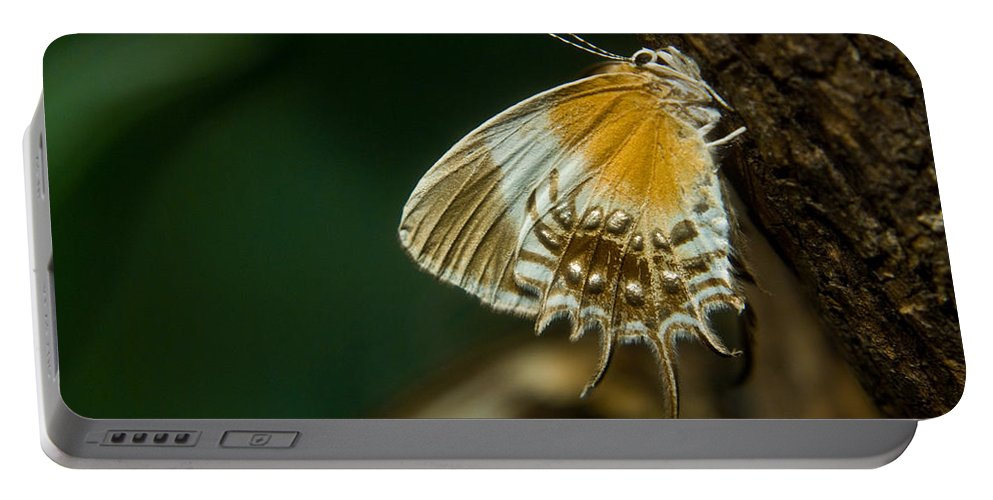 Butterfly Portable Battery Charger featuring the photograph Exotic Butterfly On Tree Bark by Douglas Barnett