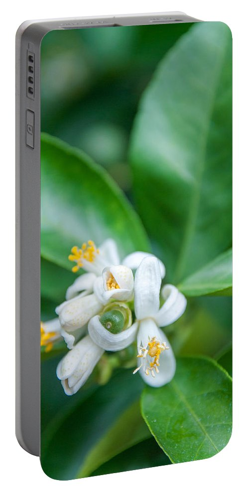 Exotic Portable Battery Charger featuring the photograph Exotic White Flower by Ilze Lucero