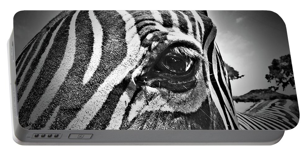 Zebra Portable Battery Charger featuring the photograph Eye Level by Douglas Barnard