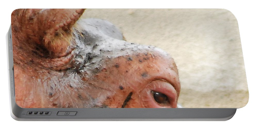 Animal Portable Battery Charger featuring the photograph Eye Of The Hippo by Michael Peychich
