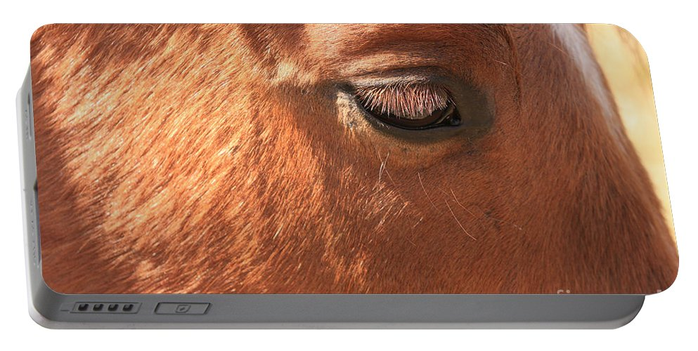 Horse Portable Battery Charger featuring the photograph Eyelashes - Horse Close Up by James BO Insogna
