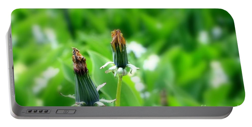 Dandelion Portable Battery Charger featuring the photograph Faded by Steve K