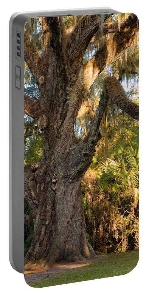 The Loop Portable Battery Charger featuring the photograph Fairchild Oak by Edie Ann Mendenhall
