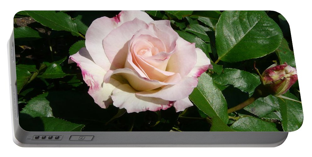 Rose Portable Battery Charger featuring the photograph Fait Accompli by Kendall Eutemey