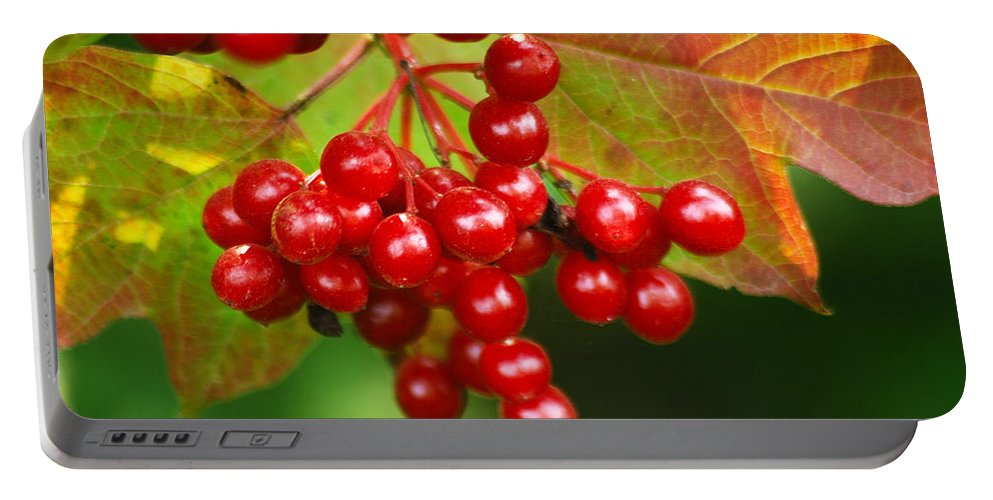 Autumn Portable Battery Charger featuring the photograph Fall Berries 2 by Michael Peychich