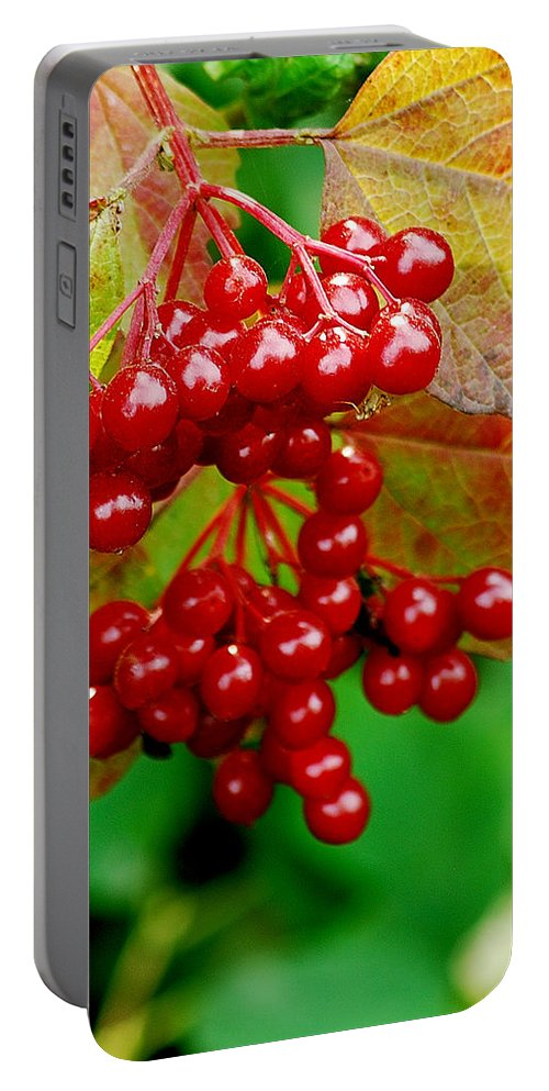 Autumn Portable Battery Charger featuring the photograph Fall Berries by Michael Peychich