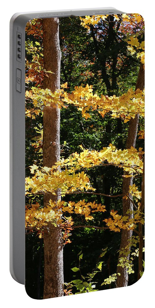 Fall Portable Battery Charger featuring the photograph Fall Forest 1 by William Selander