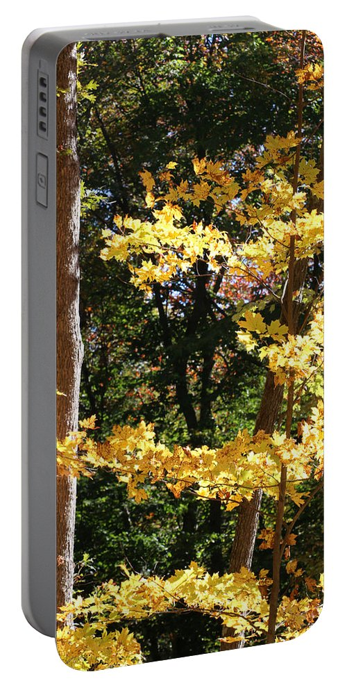 Fall Portable Battery Charger featuring the photograph Fall Forest 3 by William Selander