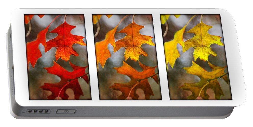 Leaves Portable Battery Charger featuring the photograph Fall Leaves by Jill Reger