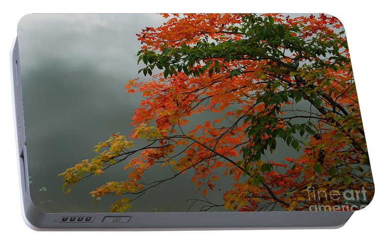 Trees Portable Battery Charger featuring the photograph Fall by Michelle Hastings