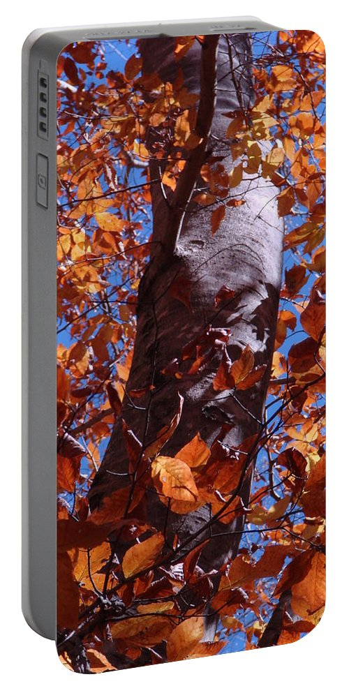 Landscape Portable Battery Charger featuring the photograph Fall Tree by Mary Halpin
