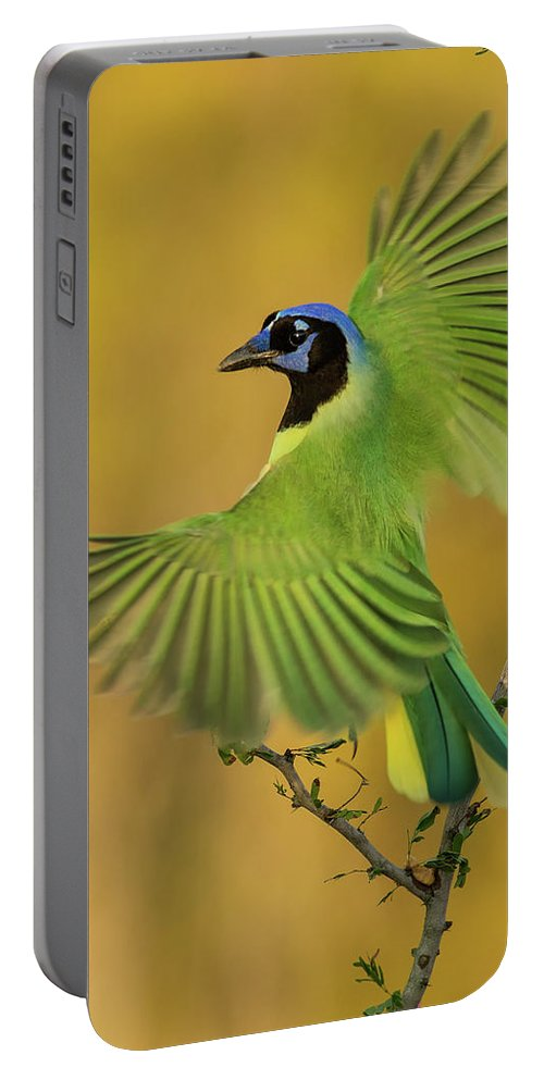 Green Jay Portable Battery Charger featuring the photograph Fan Dancer by Christopher Ciccone