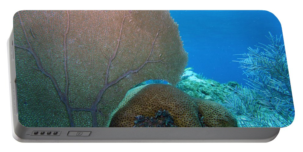 Nature Portable Battery Charger featuring the photograph Fan Vs. Brain by Kimberly Mohlenhoff