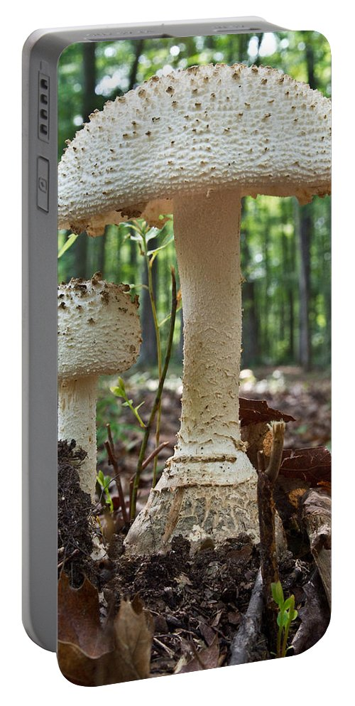 Cumberland Portable Battery Charger featuring the photograph Father And Son Mushrooms by Douglas Barnett
