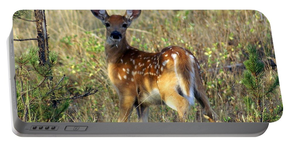 Deer Portable Battery Charger featuring the photograph Fawn by Marty Koch