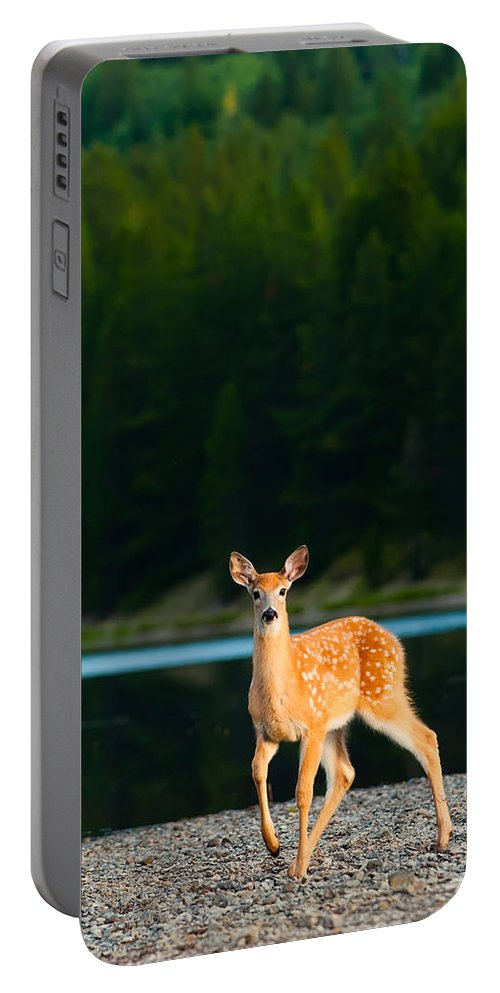 2006 Portable Battery Charger featuring the photograph Fawn by Sebastian Musial