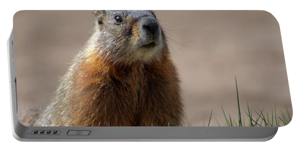 Wyoming Portable Battery Charger featuring the photograph Fearless by Frank Madia