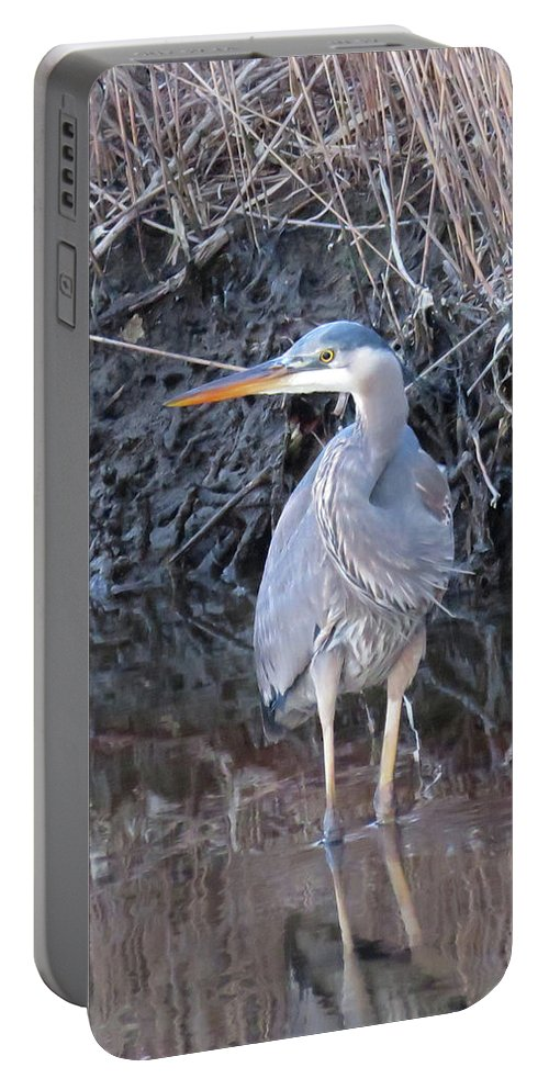 Great Blue Heron Portable Battery Charger featuring the photograph Feather Boa by Pat Miller