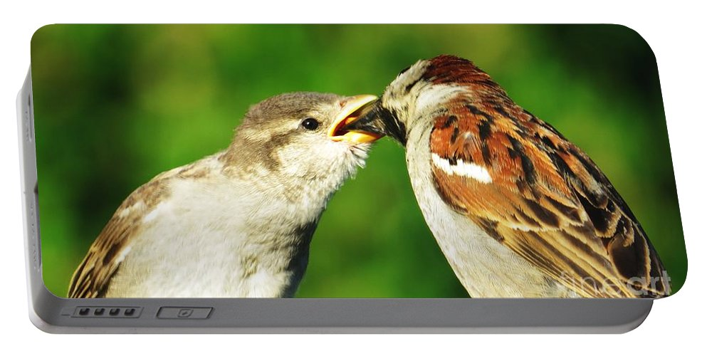 Sparrows Portable Battery Charger featuring the photograph Feeding Baby Sparrow 3 by Judy Via-Wolff