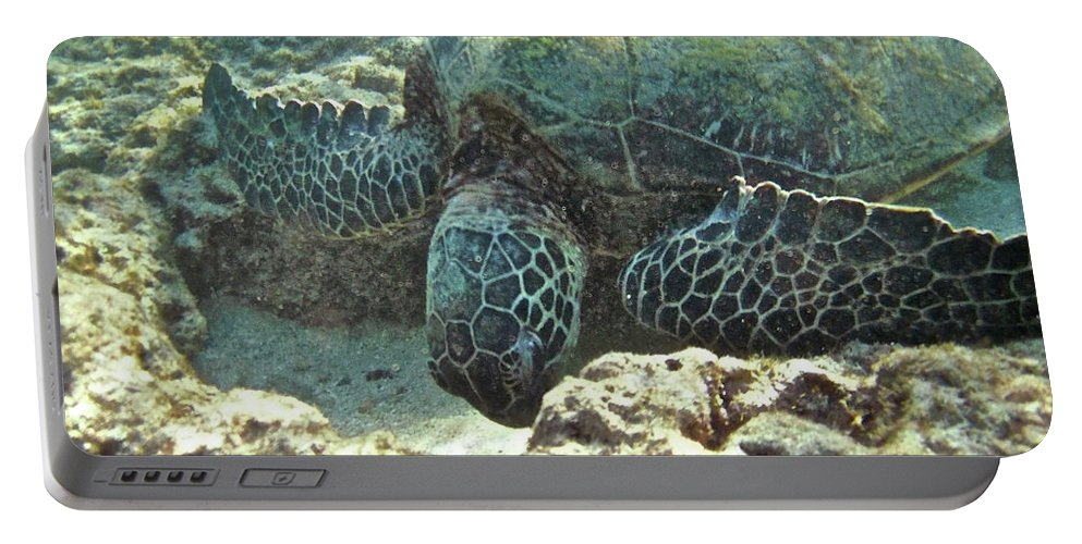 Big Portable Battery Charger featuring the photograph Feeding Sea Turtle by Michael Peychich