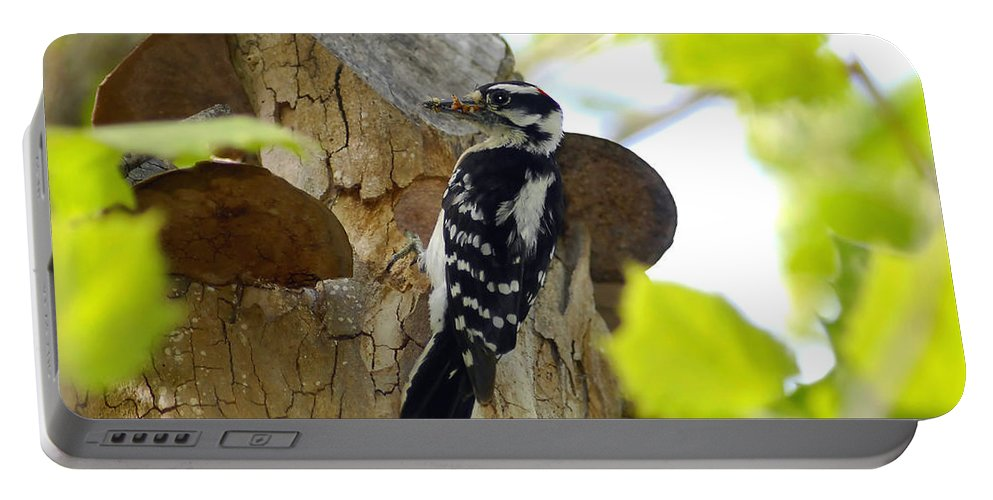Downy Woodpecker Portable Battery Charger featuring the photograph Feeding Time by David Lee Thompson