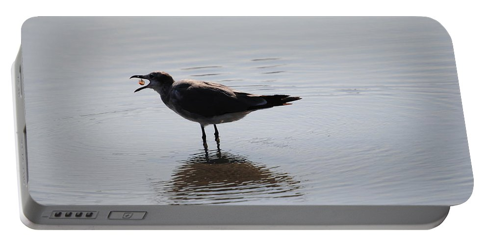 Beach Portable Battery Charger featuring the photograph Feeding Time by Eric Liller