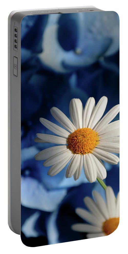 Daiy Portable Battery Charger featuring the photograph Feeling Blue Daisies by Trish Tritz