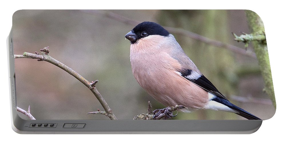 Bullfinch Portable Battery Charger featuring the photograph Female Bullfinch by Bob Kemp