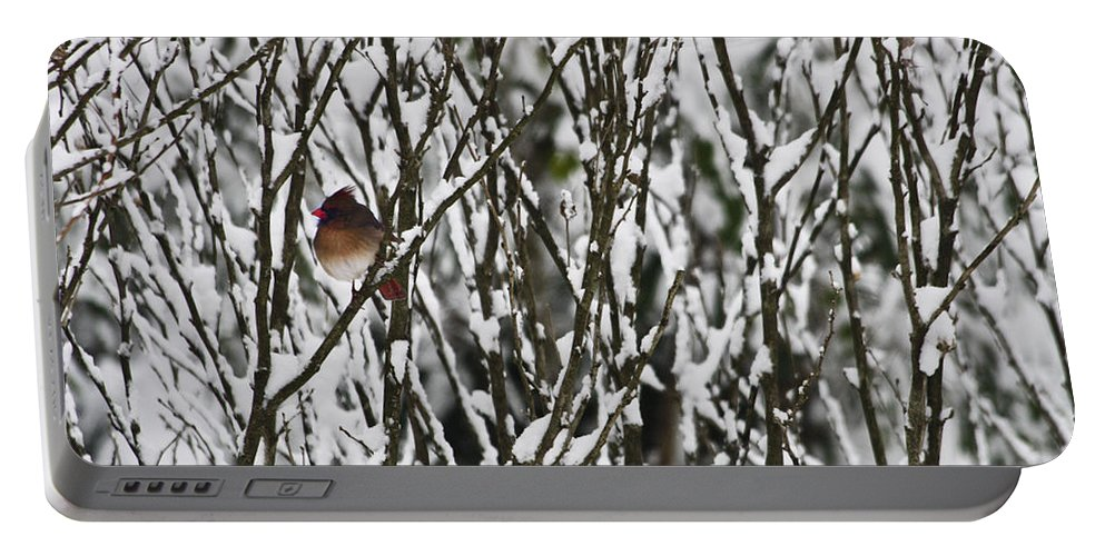 Cardinal Portable Battery Charger featuring the photograph Female Cardinal In The Snow by Teresa Mucha