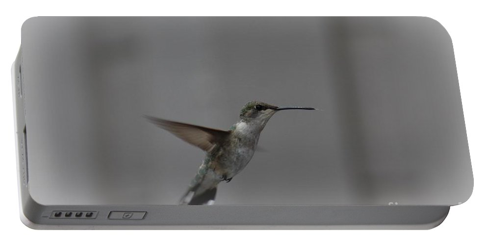 Hummingbird Portable Battery Charger featuring the photograph Female Hummingbird by LKB Art and Photography