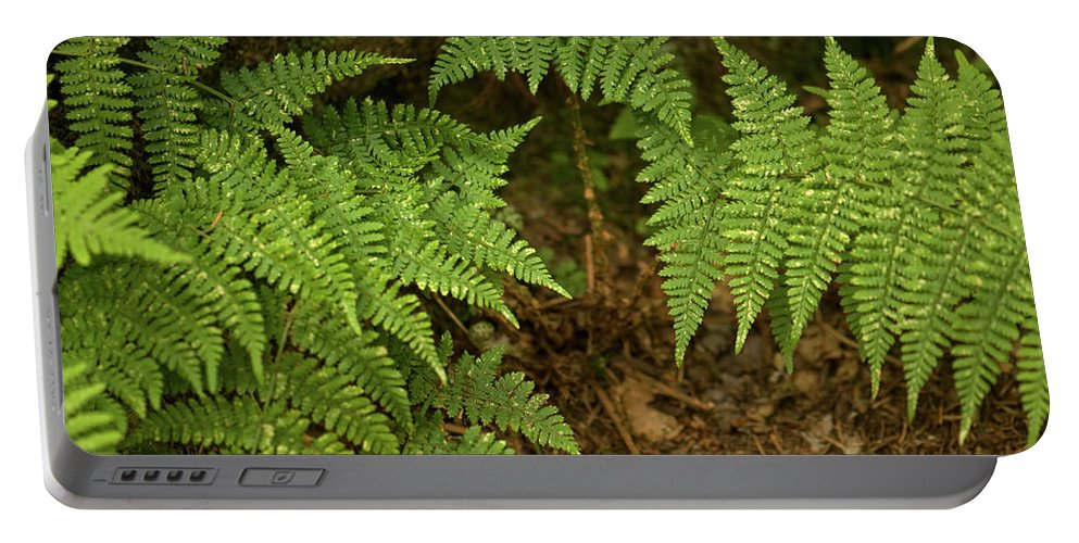Fern Portable Battery Charger featuring the photograph Fern Garden by Paul Mangold