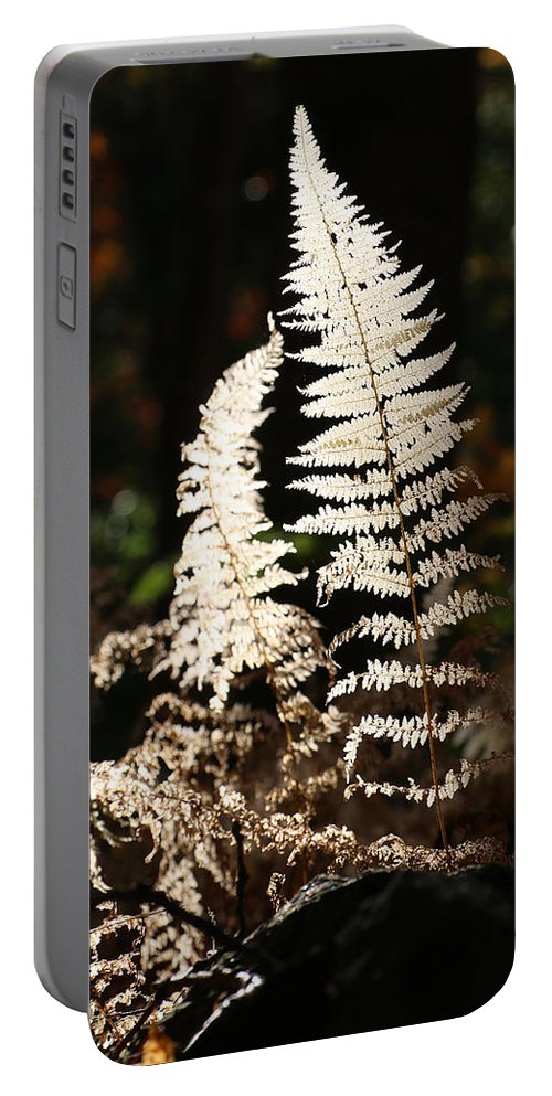 Fern Portable Battery Charger featuring the photograph Fern Glow 2 by William Selander