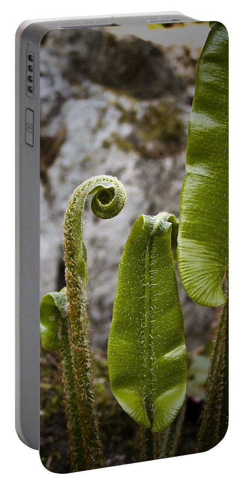 Irish Portable Battery Charger featuring the photograph Fern Study At Blarney Castle Ireland by Teresa Mucha