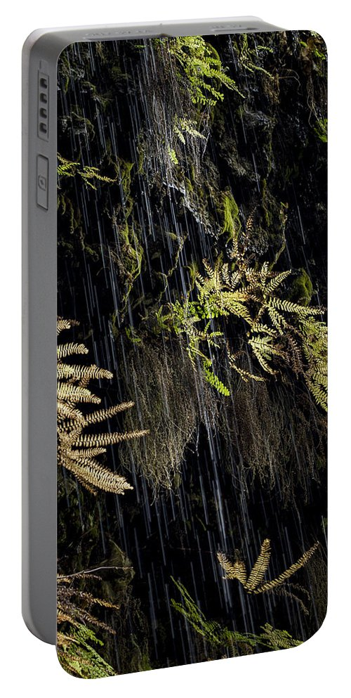 Jean Noren Portable Battery Charger featuring the photograph Ferns Below Falls By Jean Noren by Jean Noren