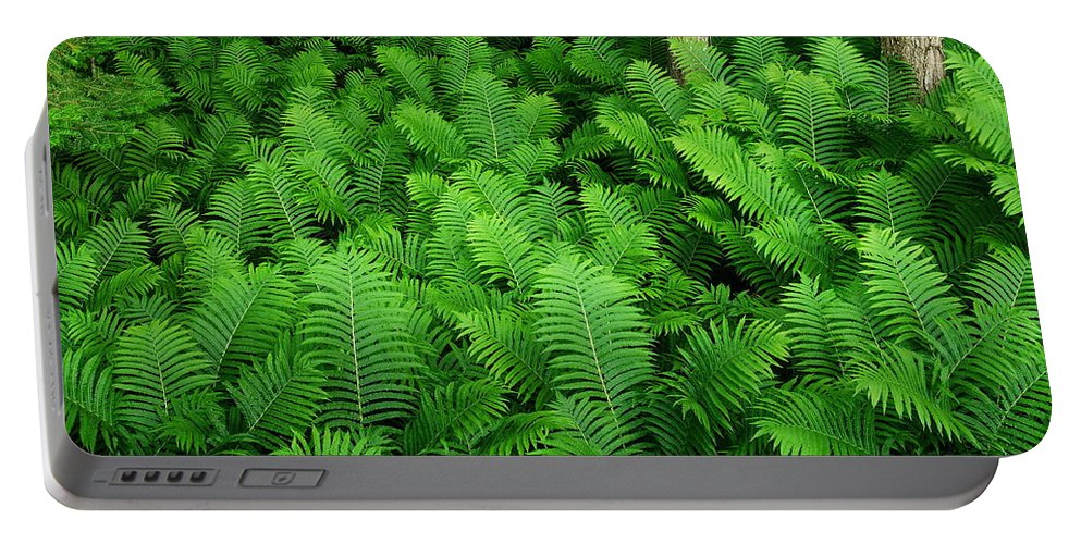 Ferns Portable Battery Charger featuring the photograph Ferns by Michael Peychich