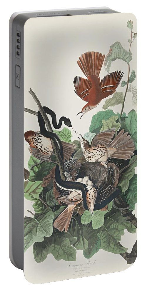 John James Audubon (after) Ferruginous Thrush (plate Cxvi) Portable Battery Charger featuring the painting Ferruginous Thrush by MotionAge Designs