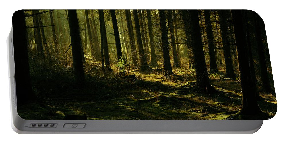 Forrest Portable Battery Charger featuring the photograph Fighting For Light by Kate Sadler