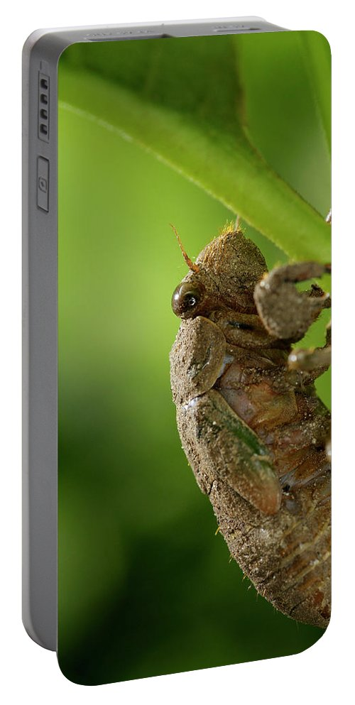 Final Portable Battery Charger featuring the photograph Final Instar Of A Cicada Emerging From The Ground To Molt On A L by Reimar Gaertner