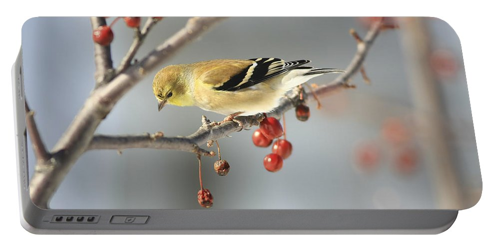 Finch Portable Battery Charger featuring the photograph Finch Eyeing Seeds by Deborah Benoit