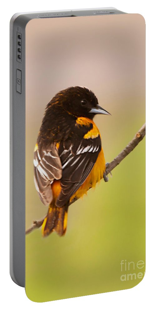 Finch Portable Battery Charger featuring the photograph Finch by Gaby Swanson