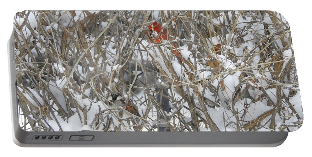 Birds Portable Battery Charger featuring the photograph Find The Birds by Betty-Anne McDonald