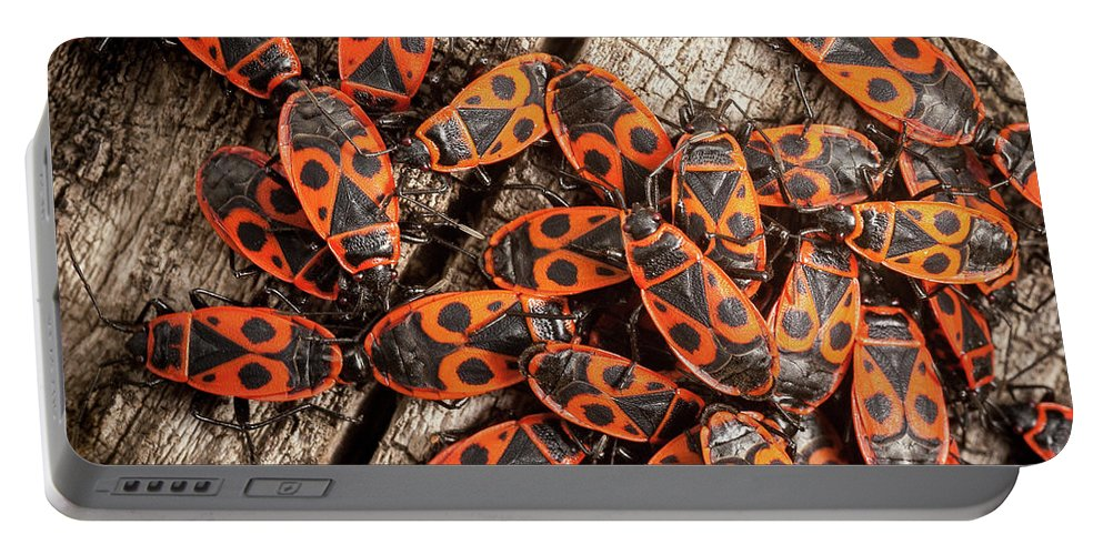 Animalia Portable Battery Charger featuring the photograph Fire Bugs by Stefan Rotter