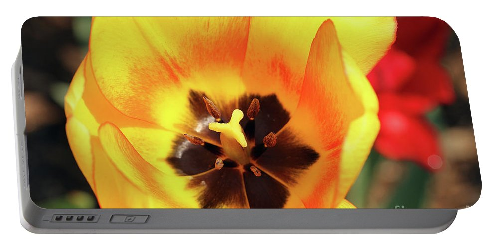Tulip Portable Battery Charger featuring the photograph Fire Tulip by Douglas Milligan