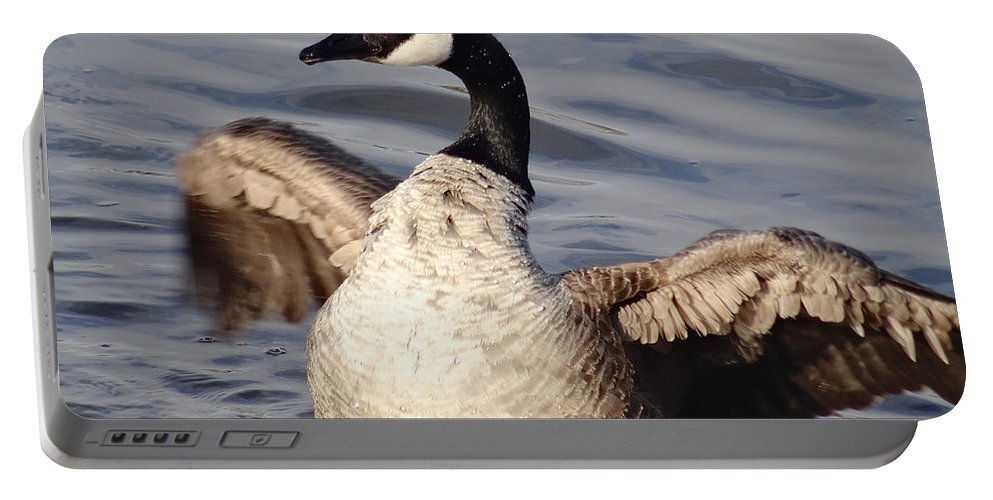 Birds Portable Battery Charger featuring the photograph First Day Of Spring Goose by Christopher Plummer